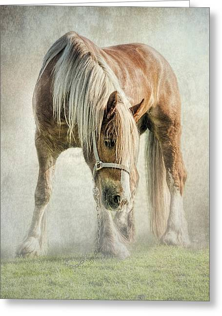 Gypsy Greeting Cards - Gypsy in morning mist. Greeting Card by Brian Tarr