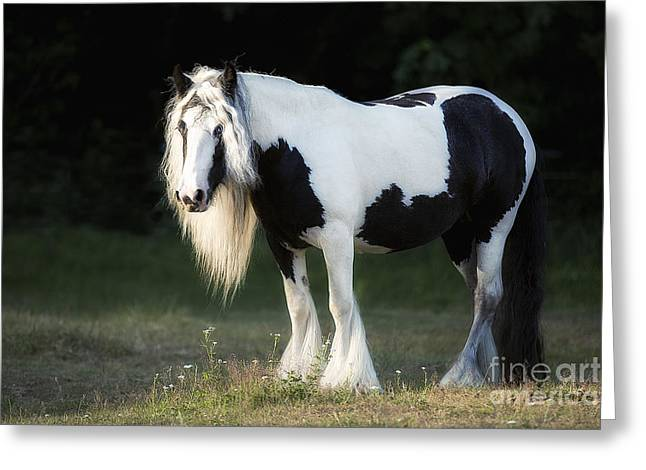 Gypsy Greeting Cards - Gypsy Vanner Horse Greeting Card by Joan Bush