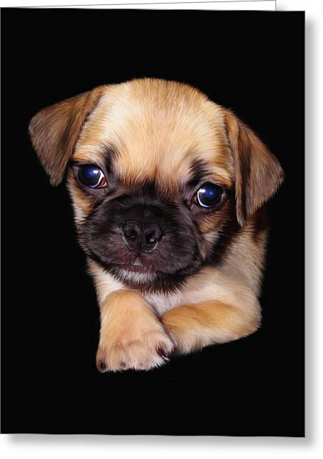 Puppies Digital Greeting Cards - Hades Greeting Card by Julie L Hoddinott
