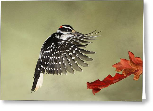 Hairy Woodpecker Greeting Cards - Hairy and the Pin Oaks Greeting Card by Gerry Sibell