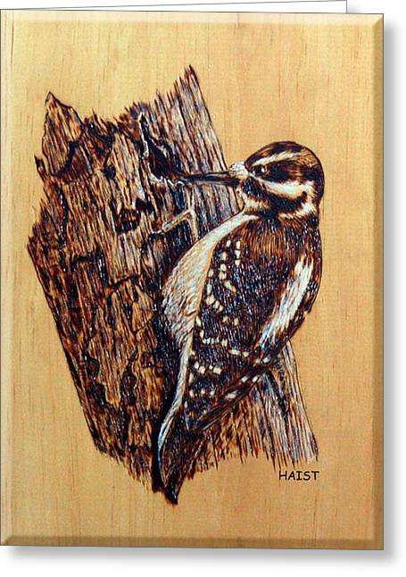 Sketch Pyrography Greeting Cards - Hairy Woodpecker Greeting Card by Ron Haist