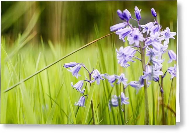 Hald Bluebells Greeting Card by Eric Sloan