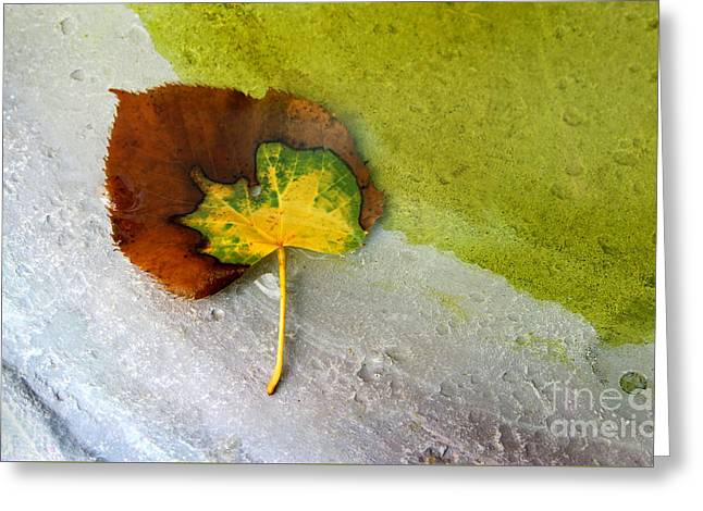 Fall Trees Greeting Cards - Half Alive Greeting Card by Karen Adams