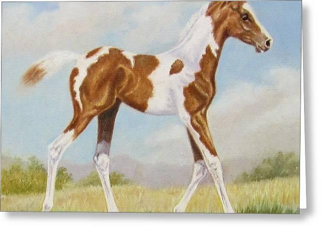 Half Arabian Pinto Filly Greeting Card by Dorothy Coatsworth