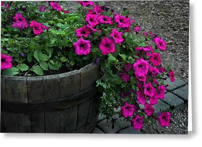 Majenta Greeting Cards - Half Barrel of Flowers Greeting Card by Joanne Coyle
