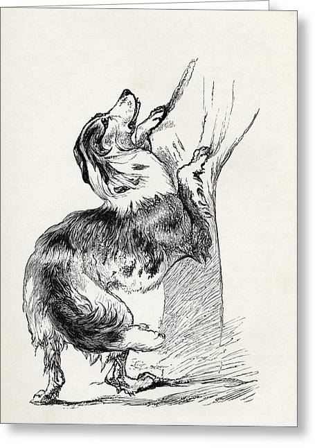 Bred Drawings Greeting Cards - Half Bred Shepherd Dog Caressing His Greeting Card by Ken Welsh