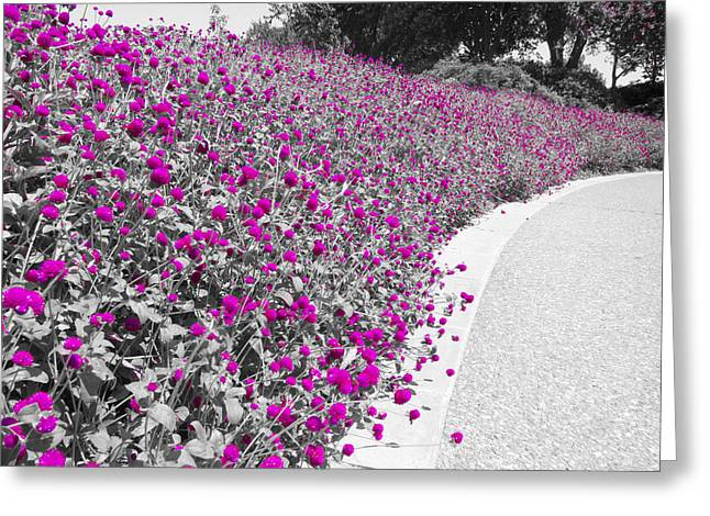 Dallas Arboretum Greeting Cards - Half of Color Greeting Card by Douglas Barnard