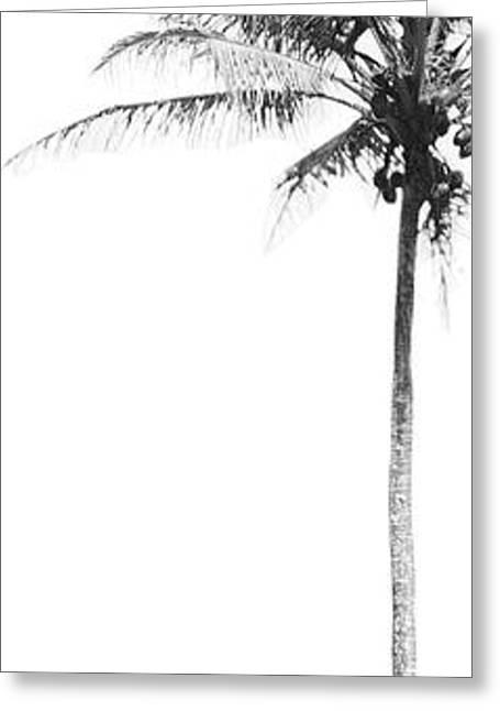 Beach Photos Greeting Cards - Half Palm I Greeting Card by David Paul Murray