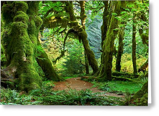Hall Of Mosses - Craigbill.com - Open Edition Greeting Card by Craig Bill
