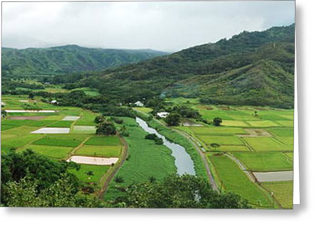 Hawaiian Pond Greeting Cards - Hanalei Taro Fields Greeting Card by Michael Peychich