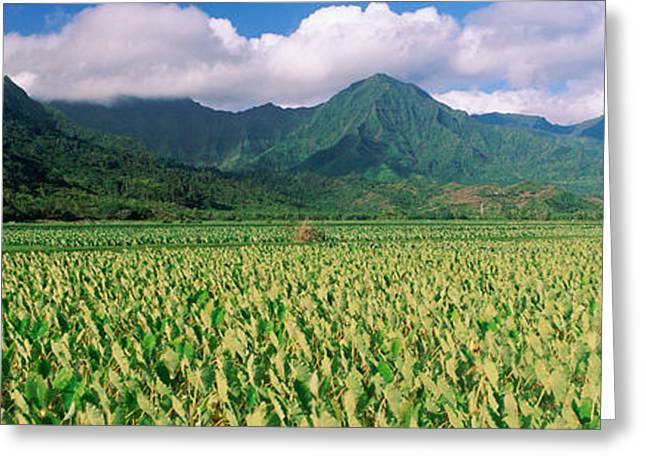Panoramics Greeting Cards - Hanalei Valley, Hawaii Greeting Card by Panoramic Images