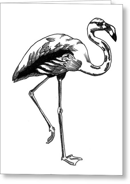 Hand Drawn Line Drawing Of Flamingo Bird Greeting Card by Matthew Gibson