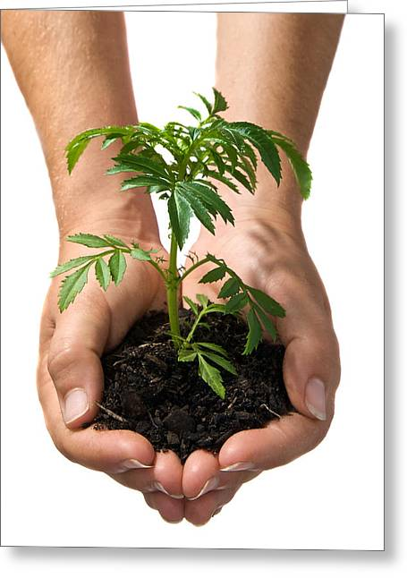 Development Of Life Greeting Cards - Hands Holding Seedling Planted In Soil Greeting Card by Brooke Whatnall
