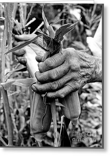 Hands With Corn Ears Greeting Card by Georgia Sheron