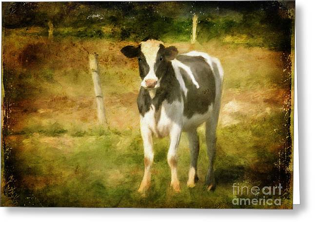 Handsome Holstein Greeting Card by Lois Bryan