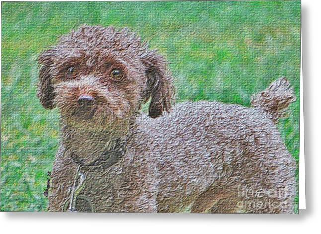 Puppies Photographs Greeting Cards - Handsome Poodle Pooch Greeting Card by Shelly Weingart