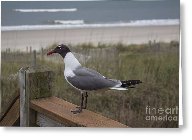 Sand Art Greeting Cards - Handsome Greeting Card by Roberta Byram