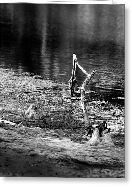 Mystical Landscape Greeting Cards - Hanging at the Wetlands BW Greeting Card by Denise Dube
