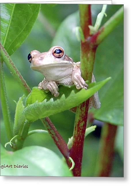 Tree Frog Greeting Cards - Hanging By A Leaf Greeting Card by DigiArt Diaries by Vicky B Fuller