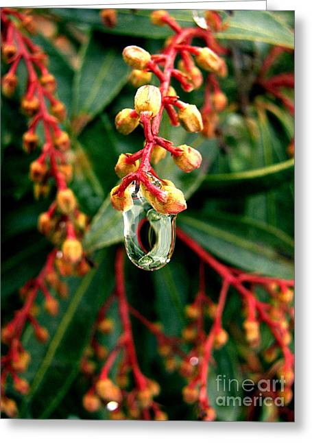 Rain Drop Greeting Cards - Hanging by a Moment Greeting Card by Colleen Kammerer