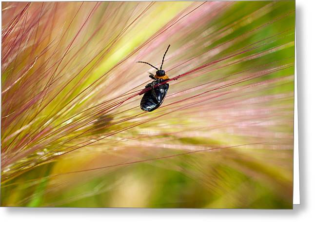 Invertebrates Greeting Cards - Hanging by a Weed Greeting Card by Richard Espenant