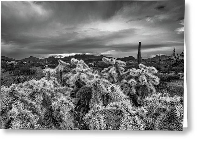 Hanging Chain Cholla Greeting Card by Joseph Smith