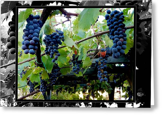 Winemaking Digital Greeting Cards - Hanging Grapes Greeting Card by Dorothy Berry-Lound