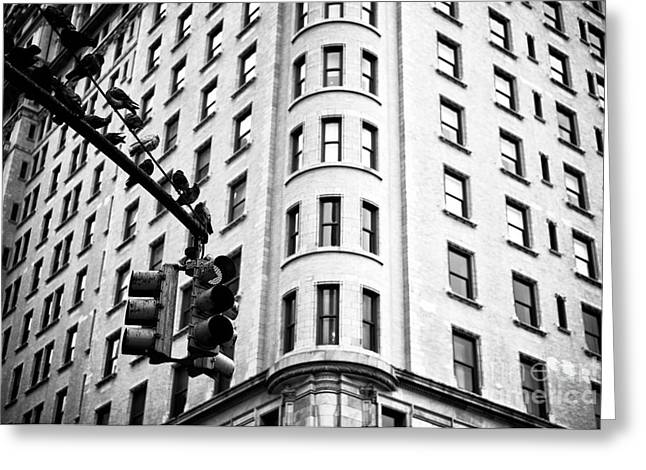 Hanging On Central Park South Greeting Card by John Rizzuto