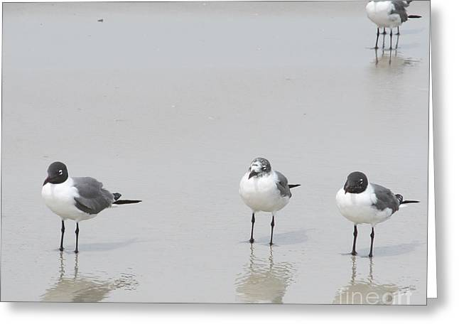 Water Fowl Greeting Cards - Hanging Out At The Beach Greeting Card by Sharon Nelson-Bianco