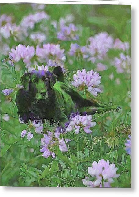 Dogs Digital Art Greeting Cards - Happiness Is A Field of Clover Greeting Card by Theresa Campbell