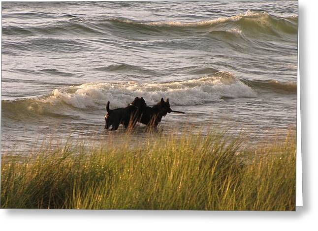 Dog With Stick Greeting Cards - Happiness is Playing in Lake Michigan  Greeting Card by Jane Greiner