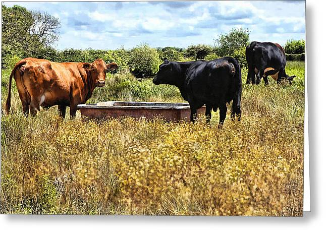 Cambria Greeting Cards - Happy Cows Come From California ... Greeting Card by Bob Kramer