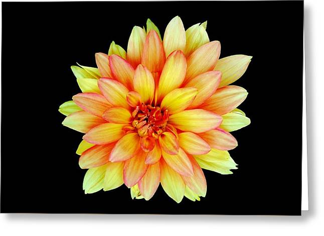 Pinks And Purple Petals Greeting Cards - Happy Dahlia Greeting Card by Michelle McPhillips