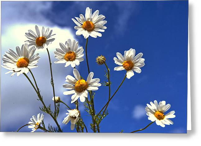 Family Time Greeting Cards - Happy Dasies Greeting Card by Jenny Rainbow