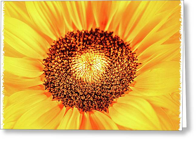 Happy Day Greeting Card by Mona Stut