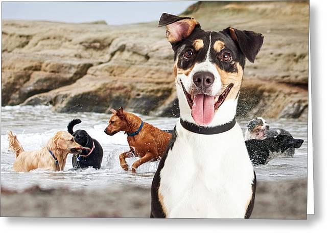 Happy Dog Having Fun At Dog Beach Greeting Card by Susan Schmitz