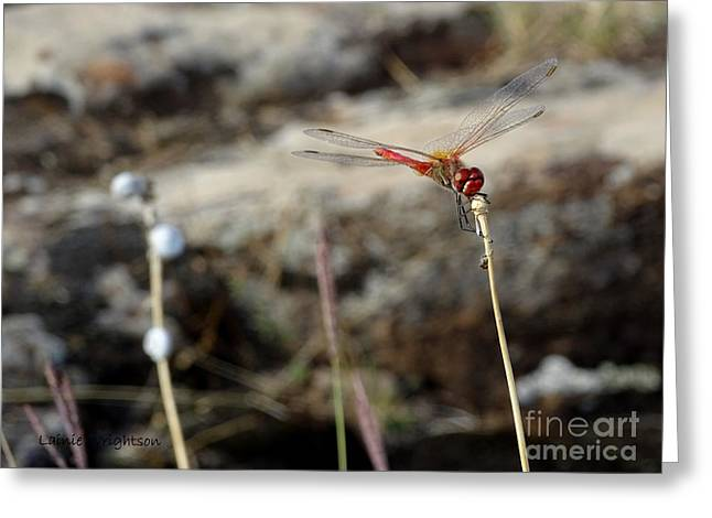 Happy Dragonfly Greeting Card by Lainie Wrightson