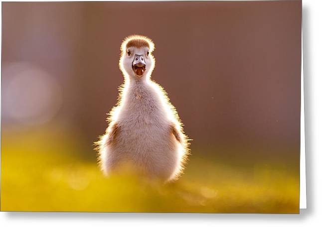 Happy Easter - Cute Baby Gosling Greeting Card by Roeselien Raimond