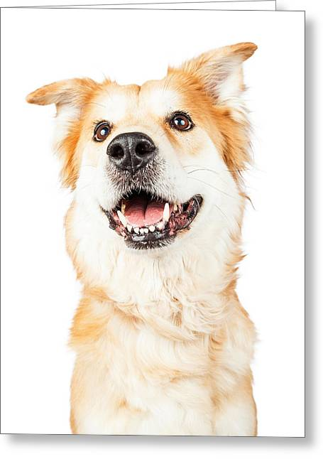 Happy Golden Retriever Crossbreed Dog Looking Up Greeting Card by Susan Schmitz