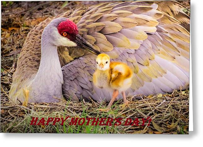 Crane Greeting Cards - Happy Mothers day					 Greeting Card by Zina Stromberg