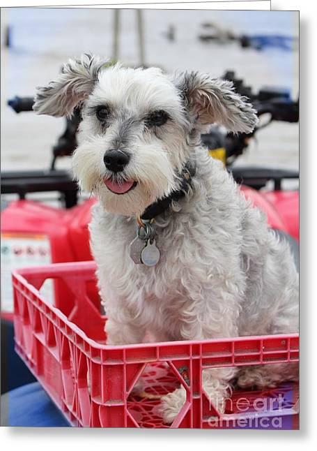 Happy - Puppy Mania Photograph Greeting Card by Ella Kaye Dickey