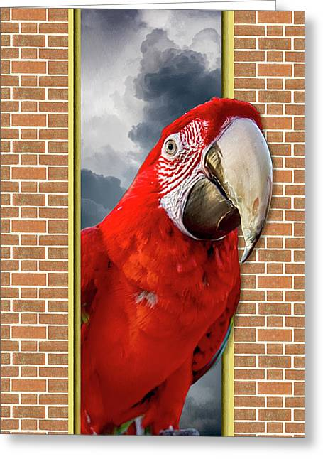 Happy Red Parrot Greeting Card by John Haldane
