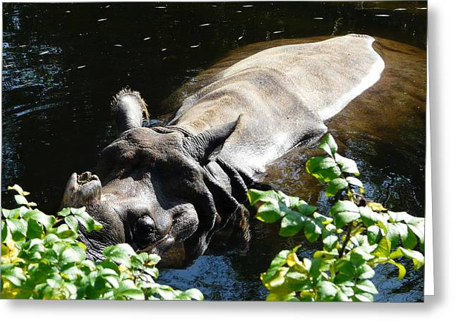Rhinoceros Unicornis Greeting Cards - Happy Rhino Greeting Card by Valerie Ornstein