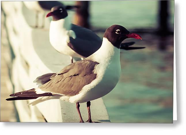 Happy Seagull  Greeting Card by Debra Forand