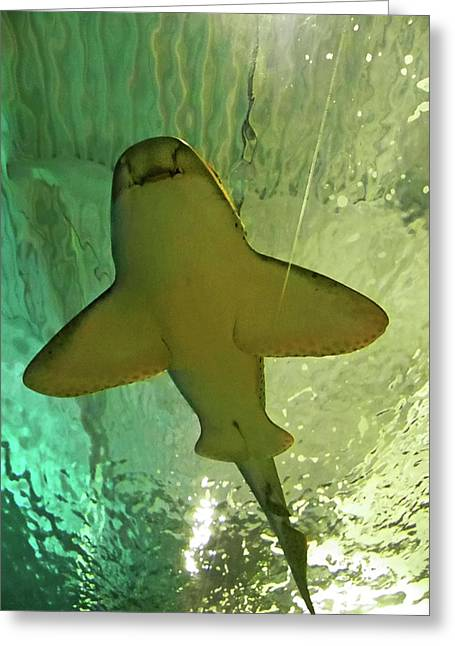 Sea Mammal Greeting Cards - Happy Shark Greeting Card by Elizabeth Hoskinson