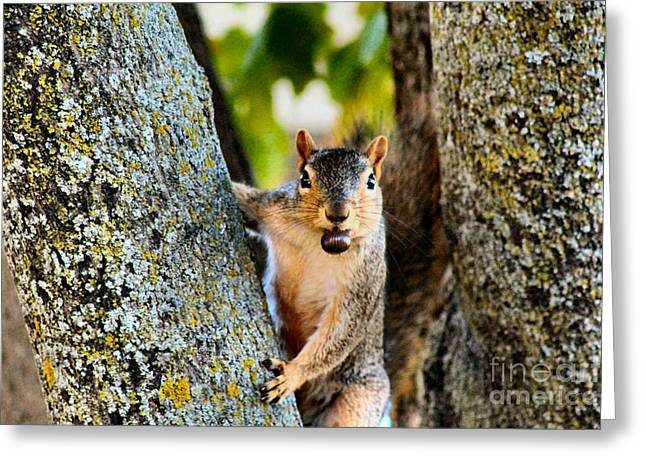 Fox Squirrel Greeting Cards - Happy Squirrel  Greeting Card by Keala Stevenson