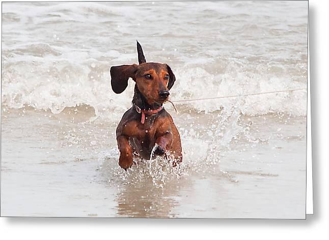 Ocean Mammals Greeting Cards - Happy Surf Dog Greeting Card by Kenneth Albin