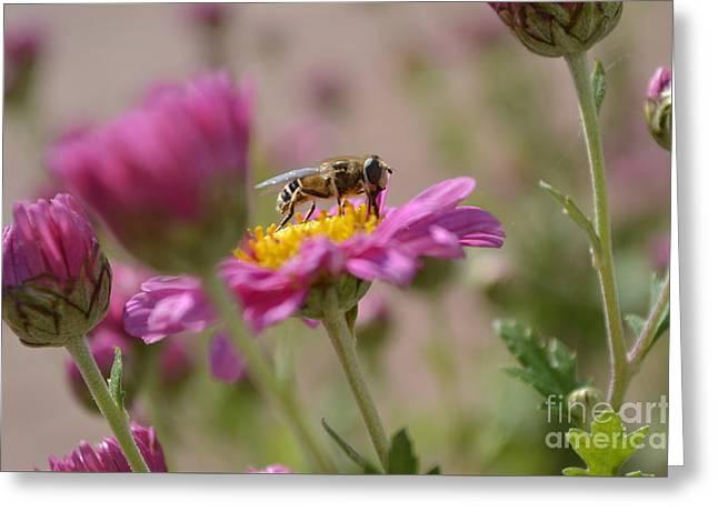 Happy To Bee Greeting Card by Eva Maria Nova