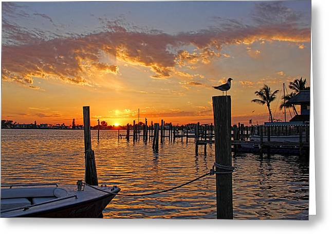 Peaceful Scene Greeting Cards - Harbor Patrol Greeting Card by HH Photography