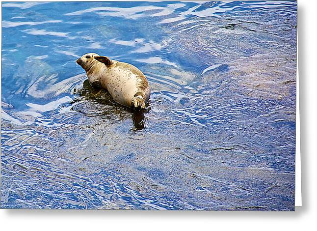 Seals In Monterey Bay Greeting Cards - Harbor Seal Waving its Flipper in Monterey Bay -California  Greeting Card by Ruth Hager